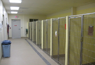 New shelter kennel